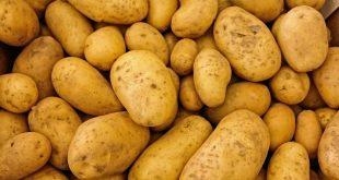 Égypte : Le Covid-19 fait chuter les exportations de pommes de terre
