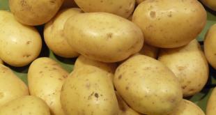 Réussir sa culture de Pomme de terre