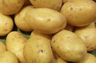 Alerte à la baisse pour le rendement et la production de la pomme de terre du Nord Ouest de l'Europe…