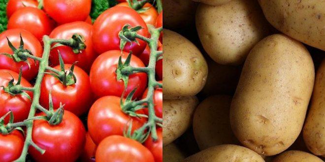Un hybride entre la tomate et la pomme de terre bientôt dans nos assiettes ?