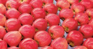 Ukraine étend ses exportations de pommes en Afrique
