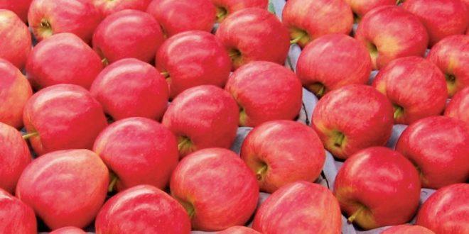 Les-pommes-turques-ciblent-le-marché-thaïlandais