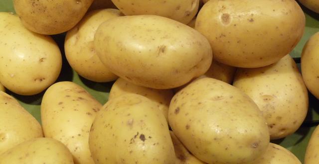 Les pommes de terre américaines s'exportent difficilement