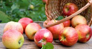 Haouz: Unité frigorifique et de conditionnement de pommes en vue