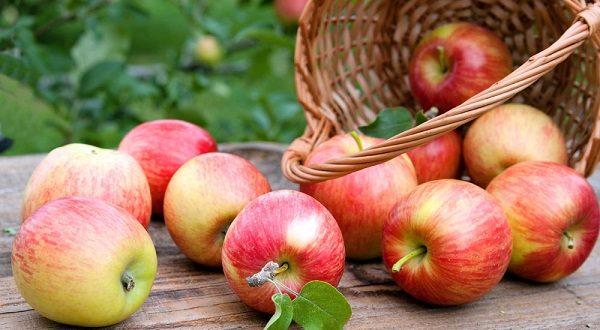 Pommes: Les quotas liés à l'importation des pommes au cours de l'année 2019/2020 fixés