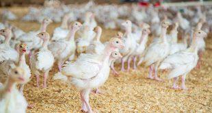 aviculture investissement maroc