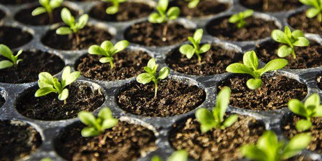 10 règles d'or pour la production de semis et de mottes en serre