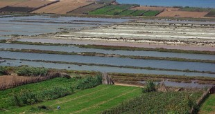 Les progrès du secteur agricole dans la région d'El Jadida