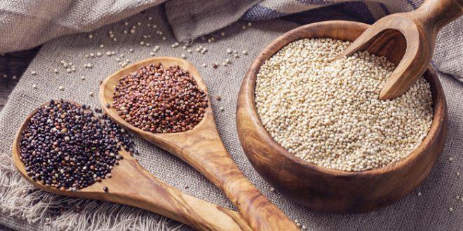 Quinoa : La production atteint 35 tonnes à Rehamna et Youssoufia