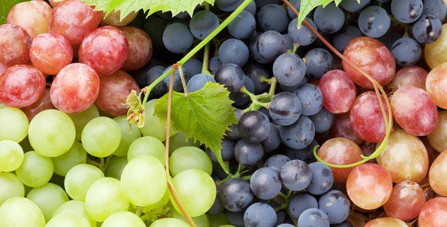Marché mondial du raisin : prix, offre, demande