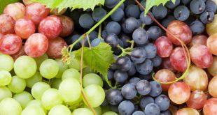 La production mondiale de raisins a dépassé les 24 millions de tonnes