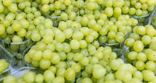 Le Danemark retire de ses marchés les raisins d'Égypte avec du chlorpyrifos