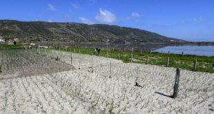 ramli tunisie agriculture