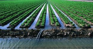 Égypte : agriculture consomme 80% des ressources en eau