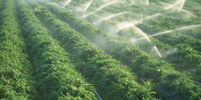 La-pénurie-d-eau-affecte-négativement-l-agriculture-marocaine