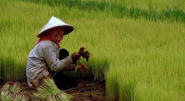 La Chine recense ses agriculteurs