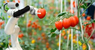 robotisation production tomates