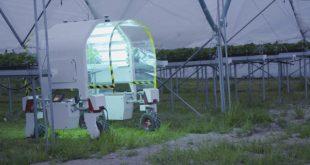 Norvège : Les robots cueilleurs de fraises deviennent populaires en raison du coronavirus