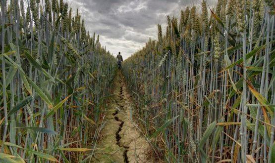 Mauvaise campagne agricole à cause de la sécheresse au Maroc ?
