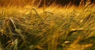 Akhannouch-secteur-agricole-marocain-traverse-année-difficile