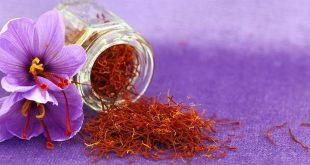 Azilal : Plus de 26 MDH pour le développement de la culture du safran