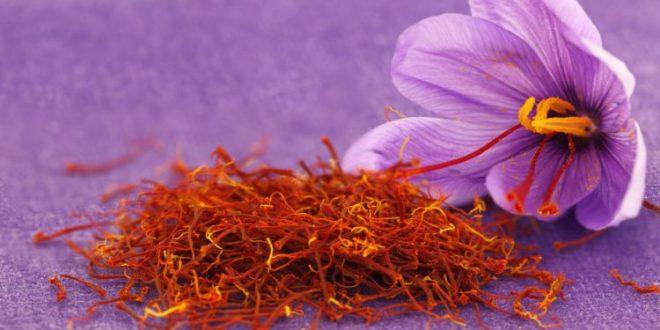 Le Maroc, 3ème producteur mondial de safran