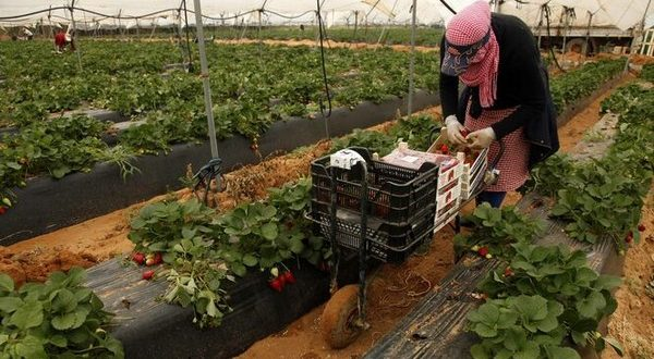 Espagne: Interfresa nie le mauvais traitement des saisonniers marocains