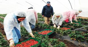 Espagne-Une-loi-pour-le-travail-des-chômeurs-et-des-immigrés-illégaux-dans-les-champs