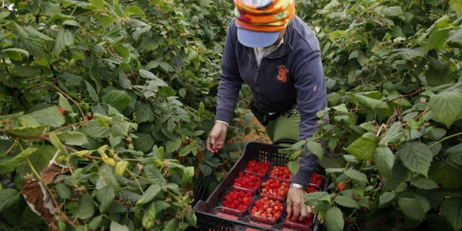 Les saisonniers marocains fortement attendus en Espagne