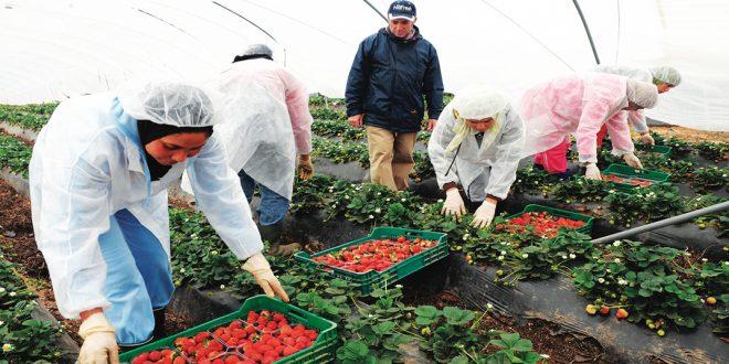 93% des saisonnières marocaines embauchées sont déjà à Huelva