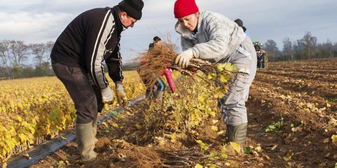 Covid-19-La-Norvège-et-la-Finlande-rouvrent-leurs-frontières-aux-travailleurs-agricoles