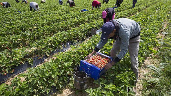 Espagne : L'embauche des saisonniers agricoles prolongée jusqu'au 30 Septembre
