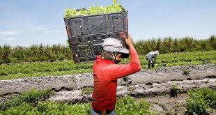 Italie se tourne vers les saisonniers marocains pour sauver sa production agricole