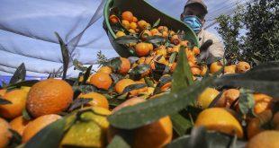 260 saisonniers agricoles marocains partent en France pour sauver les récoltes