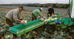 Covid-19-L-Albanie-autorise-l-envoi-de-travailleurs-agricoles-en-Grèce
