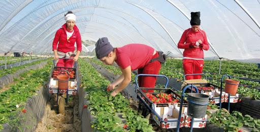 Italie lutte contre le travail des saisonniers agricoles malgré ses 35013 employés marocains