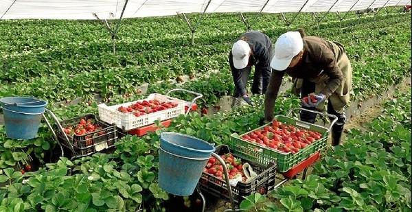 Saisonniers agricoles Espagne signe un accord avec le Honduras