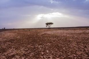 Meteo : Journée mondiale de la lutte contre la désertification et la sécheresse