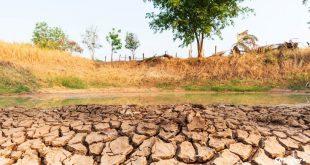 Augmentation du risque de sécheresse en Allemagne