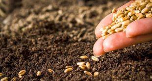 Maroc : 1,6 million de quintaux de semences pour cette saison agricole