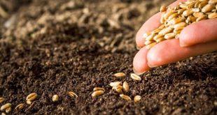 Sécurité alimentaire : Le Maroc sauvegarde ses semences en Norvège
