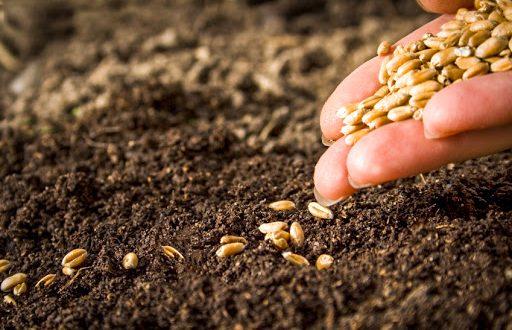 Maroc superficie de céréales automne