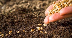 Le Maroc parmi les pays qui conservent les graines en Norvège en cas de catastrophe