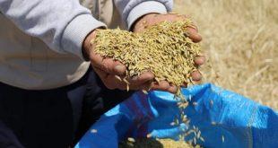 Rendement élevé pour les agriculteurs de Safi grâce au semis direct