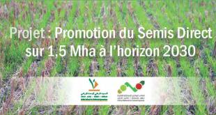 Semis direct au Maroc