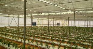 L-Égypte-lance-un-projet-horticole-de-42.000-ha-pour-diversifier-ses-exportations