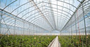 La production de légumes de serre a augmenté de 9% en Russie