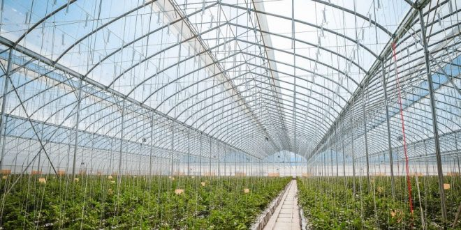 serre horticulture agricole