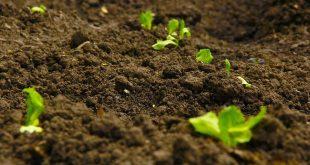 La fondation OCP lance des projets de développement agricole au Cameroun
