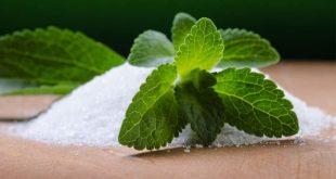 Stévia : Pourquoi le Maroc tarde à développer cette alternative saine du sucre ?